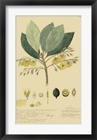 Tropical Descubes II Framed Print