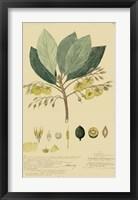 Framed Tropical Descubes II