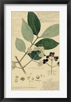Descubes Foliage & Fruit I Framed Print