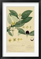 Descubes Foliage & Fruit II Framed Print