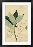 Descubes Foliage & Fruit III Framed Print