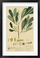 Descubes Foliage & Fruit IV Framed Print