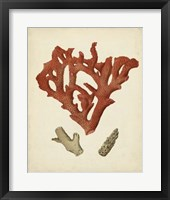 Antique Red Coral II Framed Print