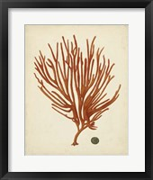 Antique Red Coral IV Framed Print