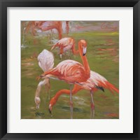 Framed Flamingo I