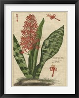 Botanical Study on Linen I Framed Print