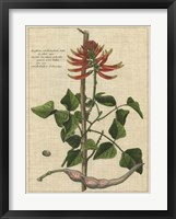 Botanical Study on Linen IV Framed Print