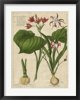 Botanical Study on Linen V Framed Print