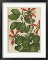 Botanical Study on Linen VI Framed Print