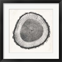 Tree Ring II Framed Print