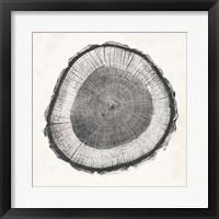Tree Ring II Framed Print