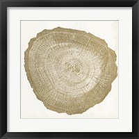 Tree Ring IV Framed Print
