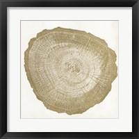 Tree Ring IV Framed Print