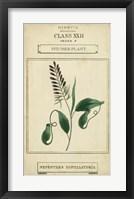 Linnaean Botany II Framed Print