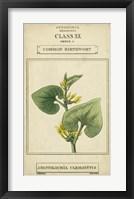 Linnaean Botany V Framed Print