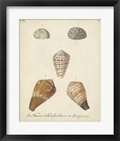 Antique Knorr Shells I Framed Print