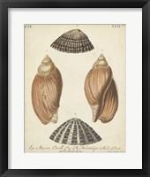Framed Antique Knorr Shells V