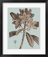 Flowering Trees IV Framed Print