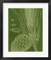 Modern Pine I Framed Print