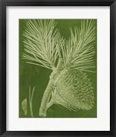 Modern Pine III Framed Print