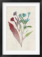 Watercolor Plants II Framed Print