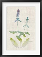 Watercolor Plants IV Framed Print