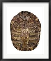 Tortoise Shell Detail I Framed Print