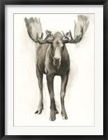 Majestic Wildlife I Framed Print
