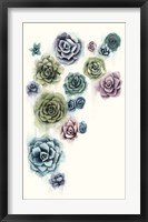Succulent Cluster II Framed Print