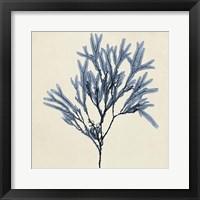 Coastal Seaweed VIII Framed Print