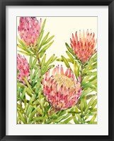 Watercolor Tropical Flowers II Framed Print