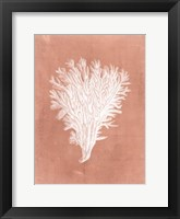 Sealife on Coral II Framed Print