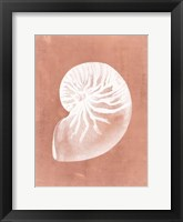 Sealife on Coral V Framed Print