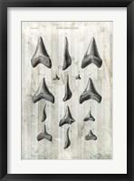 Relic Hunter I Framed Print