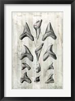 Relic Hunter II Framed Print