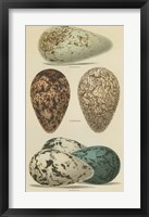 Antique Bird Egg Study I Framed Print