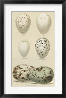 Framed Antique Bird Egg Study II