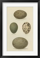 Framed Antique Bird Egg Study V