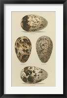 Framed Antique Bird Egg Study VI