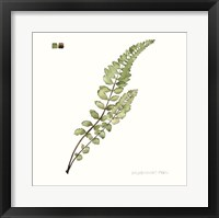 Watercolor Leaf Study I Framed Print