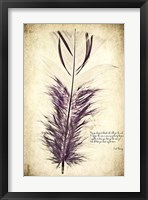 Feather in Color II Framed Print