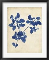 Indigo Leaf Study V Framed Print