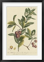 Miller Foliage & Fruit I Framed Print