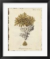 Natura Coral III Framed Print