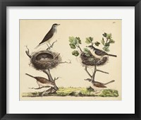 Wrens, Warblers & Nests I Framed Print