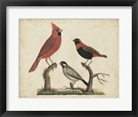Framed Cardinal & Grosbeak