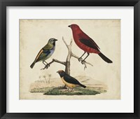 Red & Green Tanager Framed Print