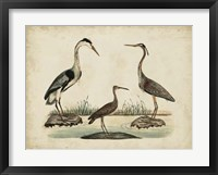 Framed Common Heron & Crested Purple Heron