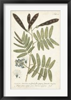 Miller Ferns I Framed Print