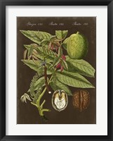 Walnut on Suede Framed Print